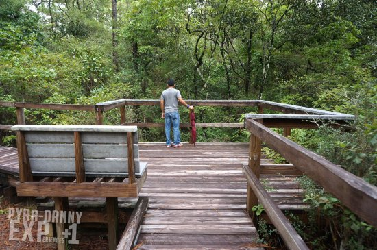 Chipley, FL: Overlooking from one of the boardwalk trails