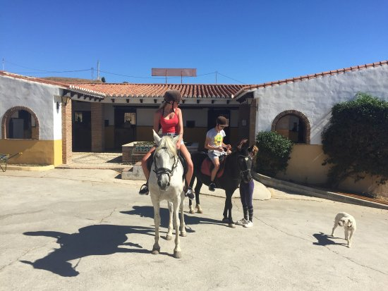 Fabulous 11 person hack from Finca la Alegria today  Enjoyed by all