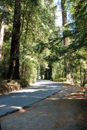 Road to Shelter Cove through the redwoods