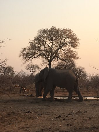 Частный заповедник Балуле, Южная Африка: photo0.jpg