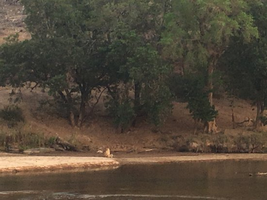 Частный заповедник Балуле, Южная Африка: photo2.jpg