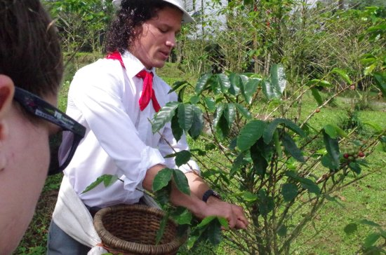 Sarapiqui, Costa Rica : Tour de cafe