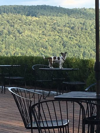 Windsor, VT : We allow dogs, but not on tables.  Bad Bentley