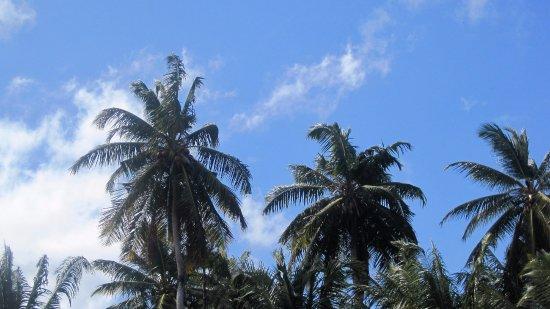 Νησί Σερφ Φωτογραφία