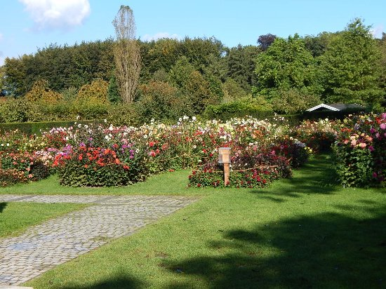 Juchen, Almanya: If you love dahlias, you will like this part of the park.
