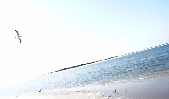 Folly Beach, SC: taking flight