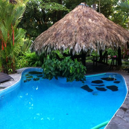 Hotel Banana Azul: Pool with palapa