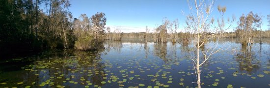 Coopernook, Australia: Viewing point over Wetland4