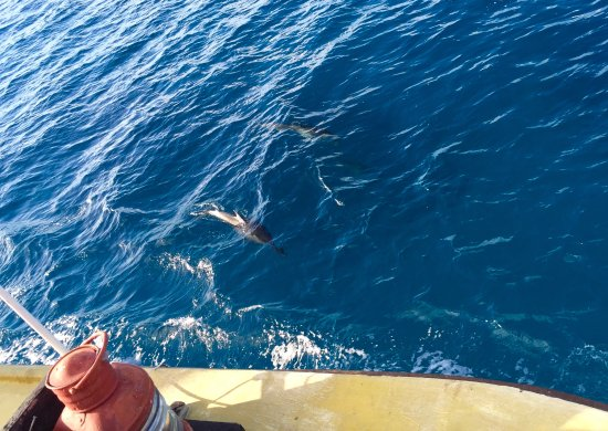South Pacific Cruises - Coongoola Day Cruise: Dolphin spotting between Moso and Lelepa islands
