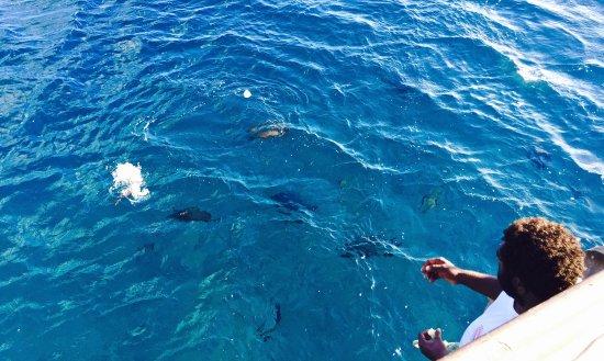 South Pacific Cruises - Coongoola Day Cruise: Fish feeding off Coongoola
