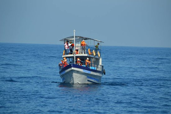 Whale Watching Sri Lanka Wiyana Marine Luxury Boat