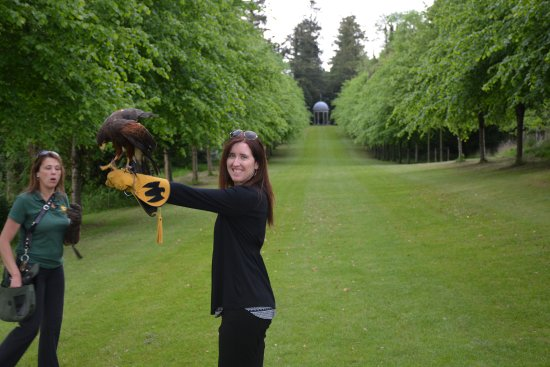 Newmarket On Fergus, Irland: Falconry tour with our guide Caroline
