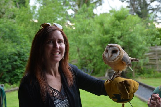 Newmarket-on-Fergus, Irlanda: A beautiful OWL!