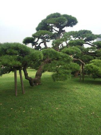 สวนฮามะริคิว: photo1.jpg