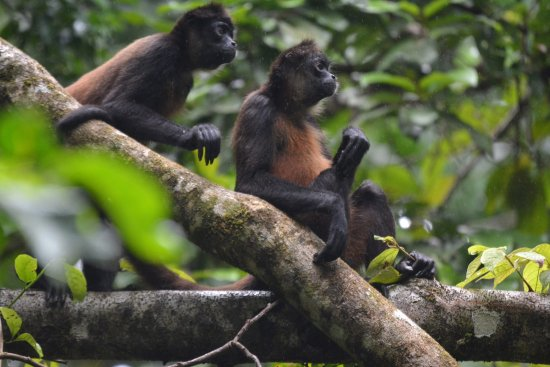 Casita Corcovado: Wildlife @ Corcovado!