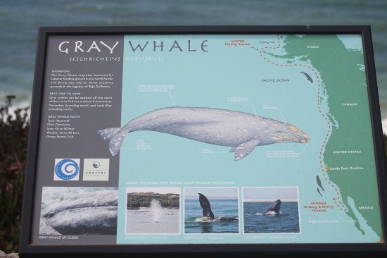 Pacifica, CA: A place to c Gray Whale