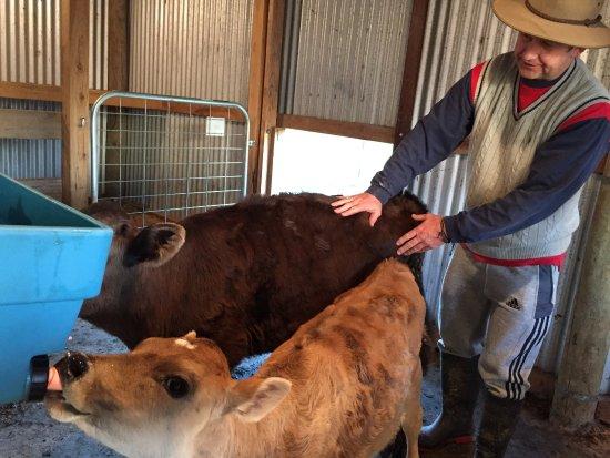 Ventnor, Australia: Feeding time