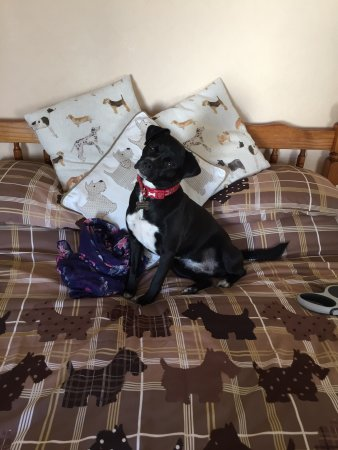 The Chesterfield Hotel : Daisy was very excited to get a treat box on arrival at the hotel and she loved the bed! :)