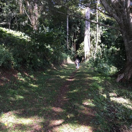 Amani Nature Reserve: photo1.jpg