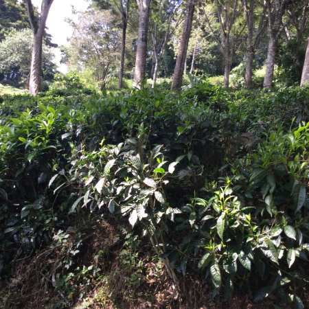 Amani Nature Reserve: photo2.jpg