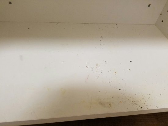Extended Stay America - Boston - Burlington: Dirtiest place we have ever stayed....