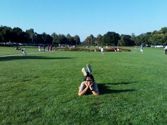 Stanford University : Nice grass!