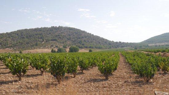 Bullas, İspanya: Del av vinodlingarna och bodegan där vi senare provade några viner, mkt. bra!
