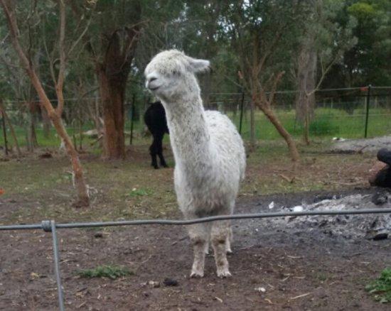 Belhus, Australia: Peaceful Farm stay feel like home.
