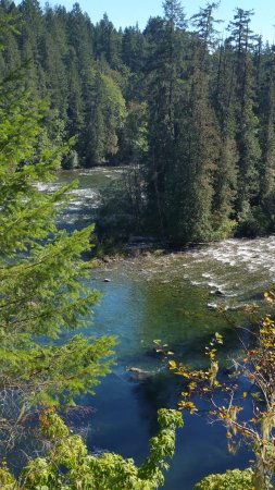 Port Alberni, Canada: downstream pond where salmon rest before the begin their journey towards the salmon ladder