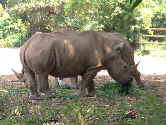 Uganda Wildlife Education Centre: photo1.jpg