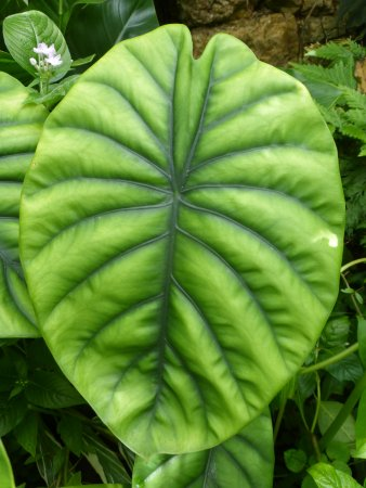 Hunte's Gardens: Just one exquisite leaf