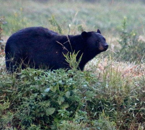 Manteo, North Carolina: He's checking us out