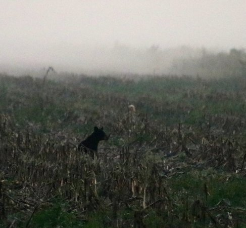 Manteo, North Carolina: another little bear