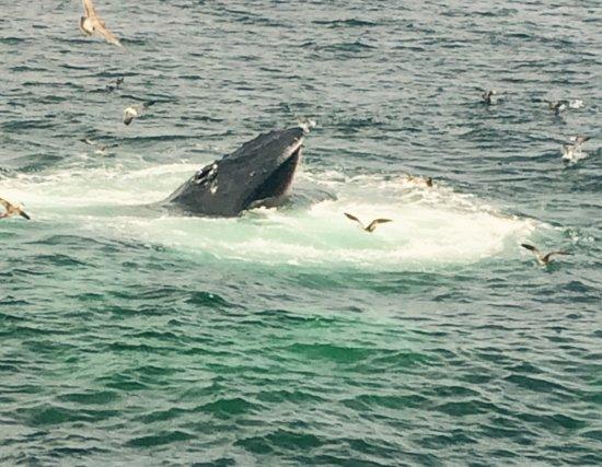 Barnstable, MA: Whale!