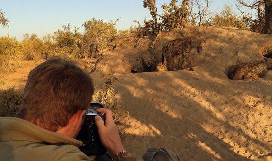 Kings Camp: Hyena Densight