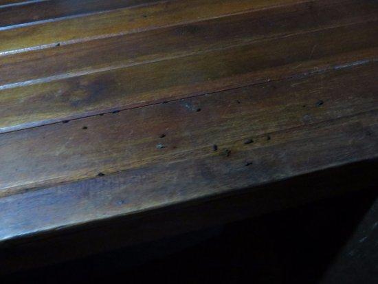 Playa Nicuesa Rainforest Lodge: excrementos de murciélagos en el armario de la habitación el día que llegamos