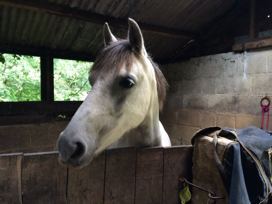 Devon, UK: Outovercott Riding Stables