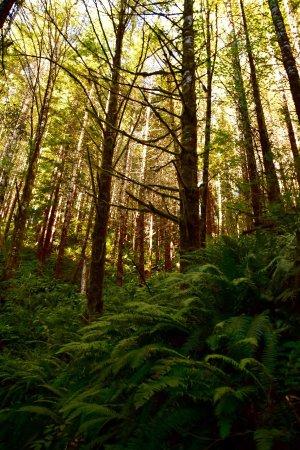 Oregon Coast, ออริกอน: photo5.jpg