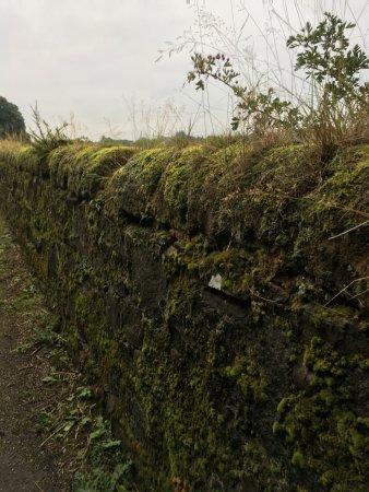 Castlecroft: photo3.jpg