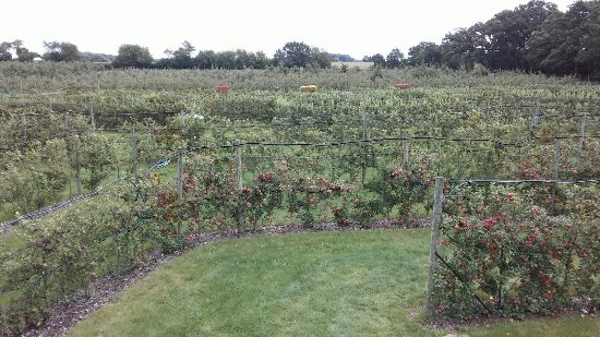 Royal Oak Farm Orchard照片