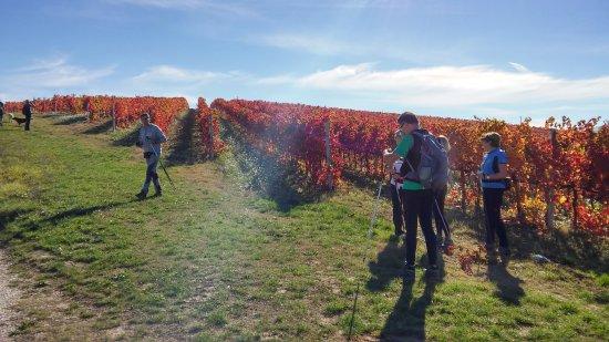 Agriturismo Il Corbezzolo: vigna Sagrantino