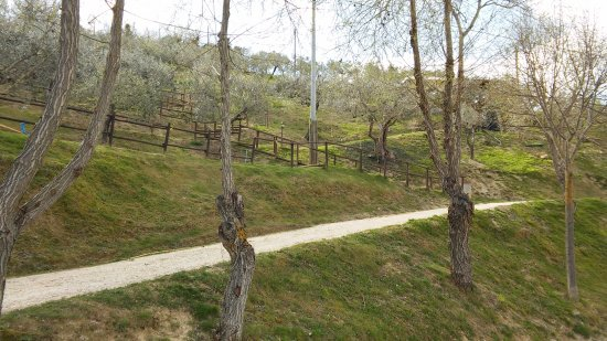 Agriturismo Il Corbezzolo: oliveto