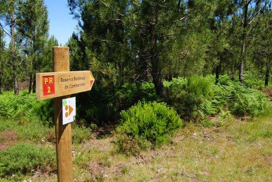 Vouzela, Portugal: Reserva Botânica de Cambarinho