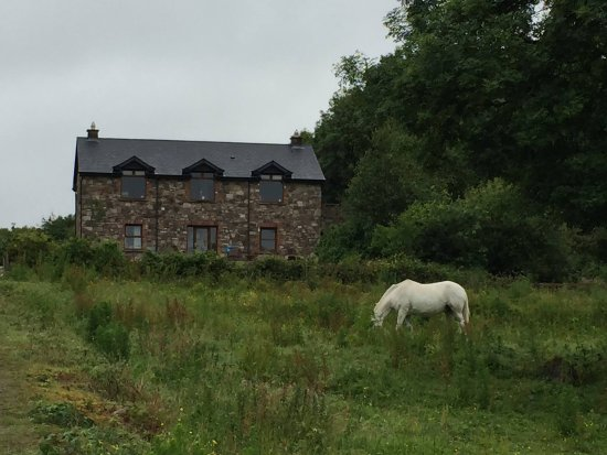 Knockvicar, Ireland: A lovely house with a retired horse in the garden