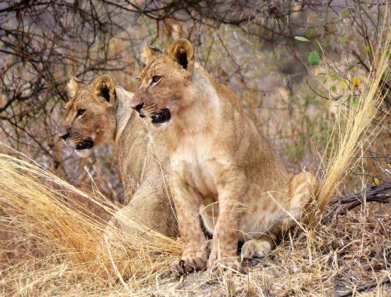 Regio Arusha, Tanzania: Tarangire Nationalpark