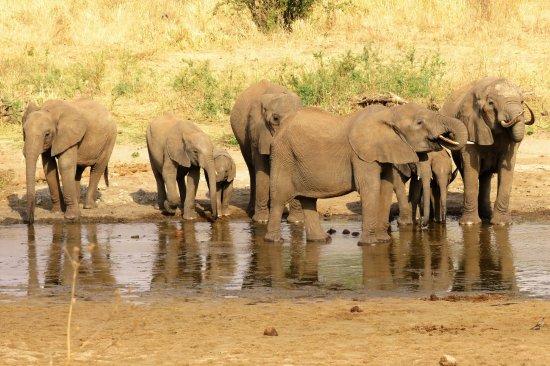 Regio Arusha, Tanzania: Serengeti
