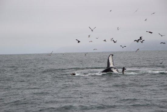 SF Bay Whale Watching : Tail fluke