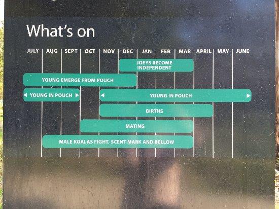 Cowes, Austrália: Calendar