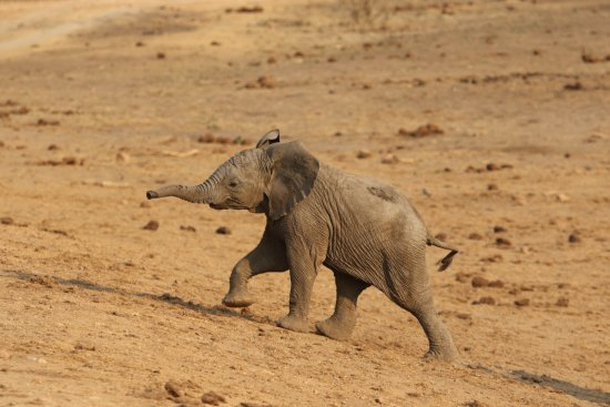 Madikwe Game Reserve Resmi