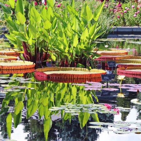 Denver Botanical Gardens - Picture of Denver Botanic Gardens, Denver ...